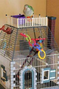 Какие клетки для птиц и аксессуары нужно дома