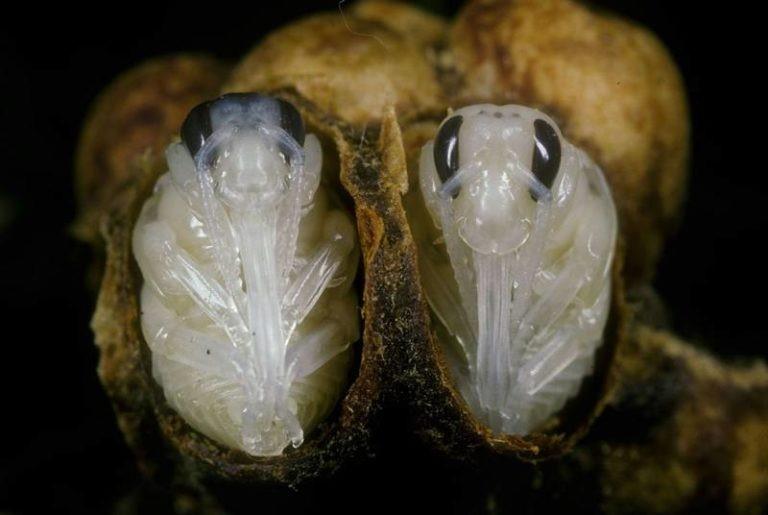 Как размножаются шмели