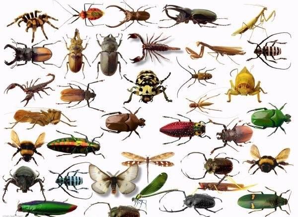 Число видов насекомых