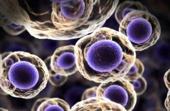 Многоклеточный организм