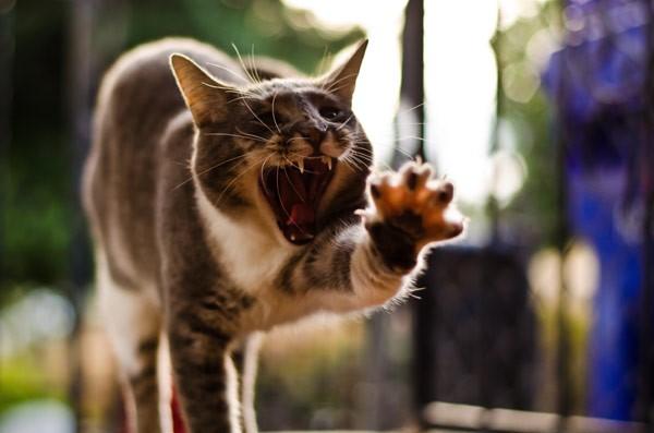 Почему кошки боятся растопыренной руки