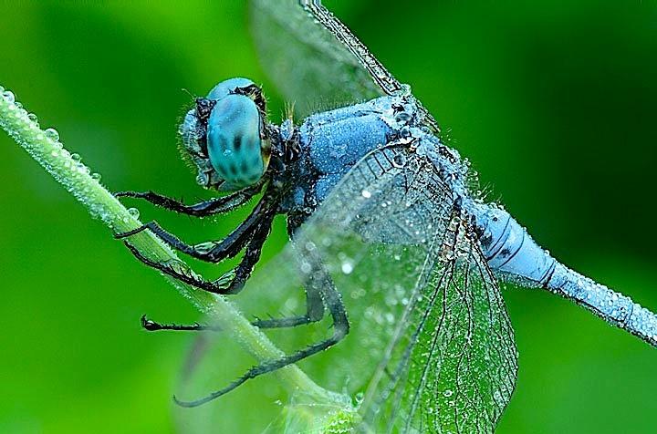 Систематика насекомых