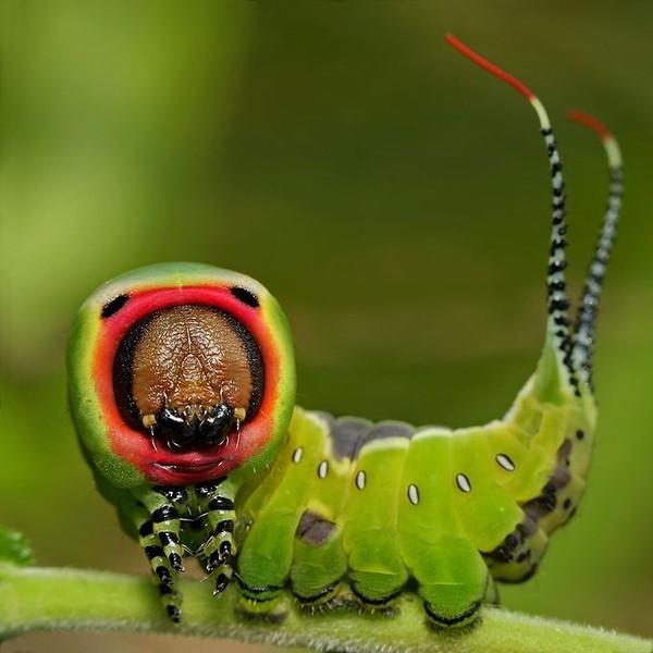 Ткани внутренней среды насекомого