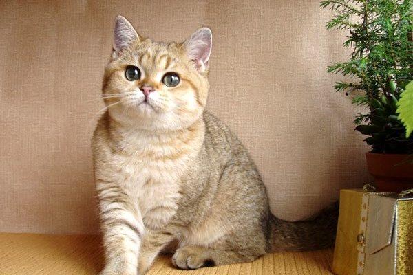 прилипают кошки