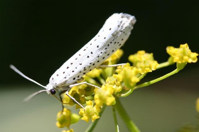 Сигналы насекомых